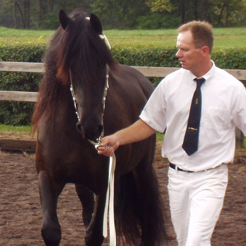 Ster Champion Friesian Horse Mare at Belle Cheval
